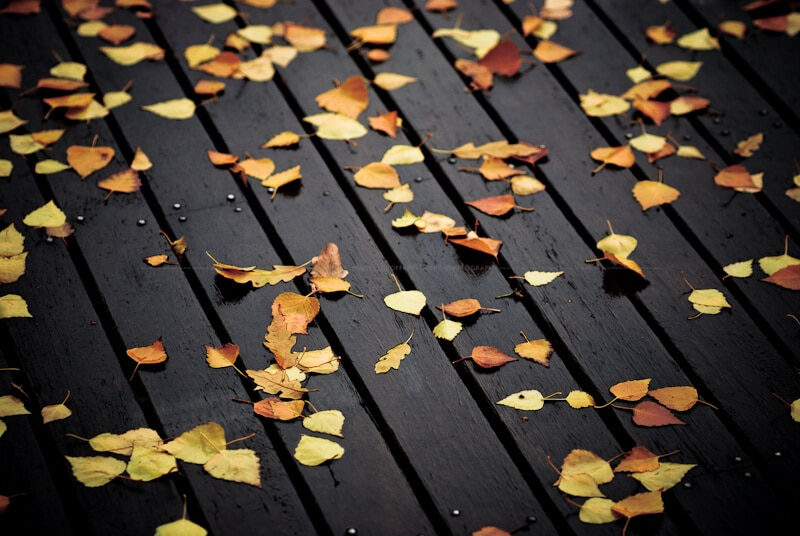 autumn leaves scattered on a wet wooden deck